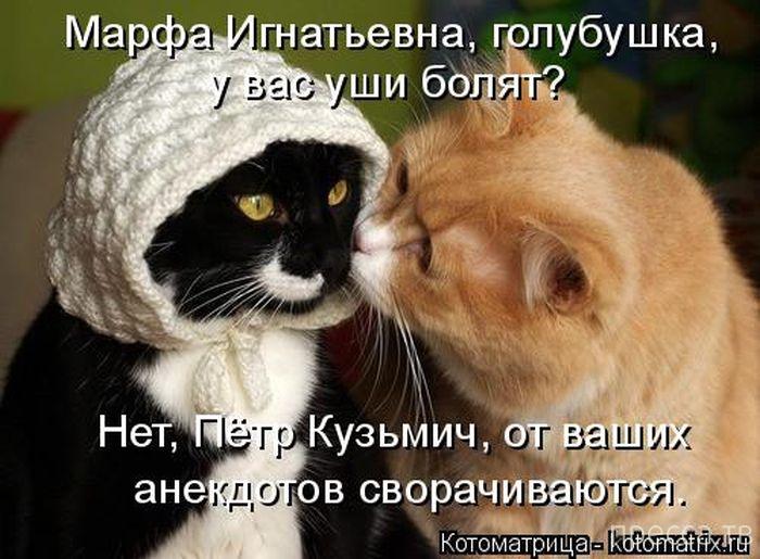Прикольные котоматрицы (35 фото)