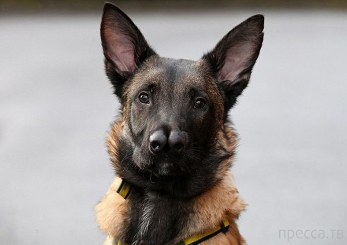Необычная собака с двойным носом (8 фото)