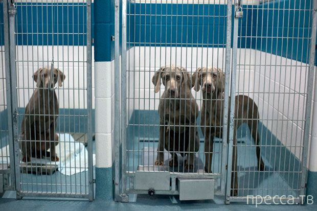 Как в приютах для животных избавляются от ненужных питомцев (11 фото)