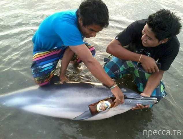 В Перу ищут хулиганов, напоивших больного дельфина пивом (4 фото)