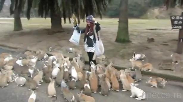 Девушку преследуют кролики... Япония