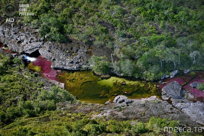 Каньо Кристалес  в Колумбии - река пяти цветов (12 фото)