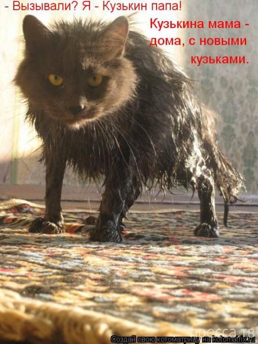 Прикольные котоматрицы, часть 10 (49 фото)