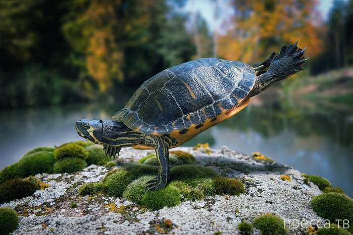 Красивые фотографии животных от швейцарского фотографа Джона Вильгельма (12 фото)