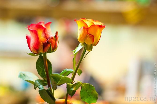 В преддверии 8 Марта:  правильный выбор цветов и секретный способ сохранить их надолго (21 фото)