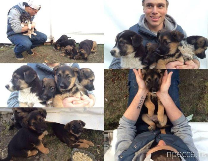 Спортсмены США забирают домой бродячих собак из Сочи (9 фото)