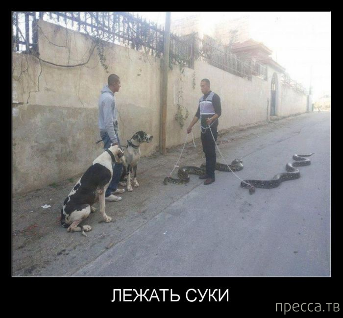Самые злобные демотиваторы, часть 113 (31 фото)