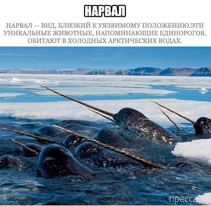Топ 17: Морские млекопитающие на грани вымирания (17 фото)