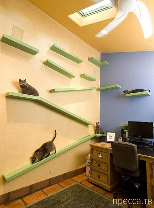 Райский дом для кошек (8 фото)