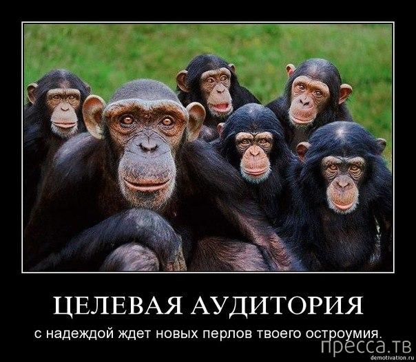 Самые злобные демотиваторы, часть 114 (49 фото)