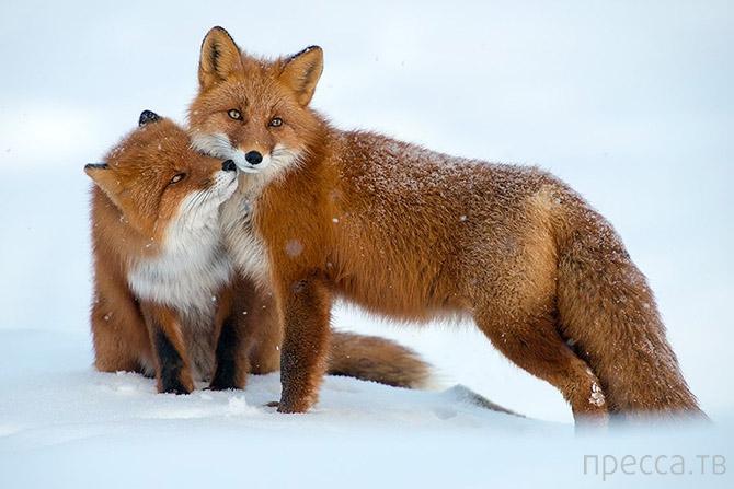 Лучшие фото National Geographic за февраль 2014 (21 фото)
