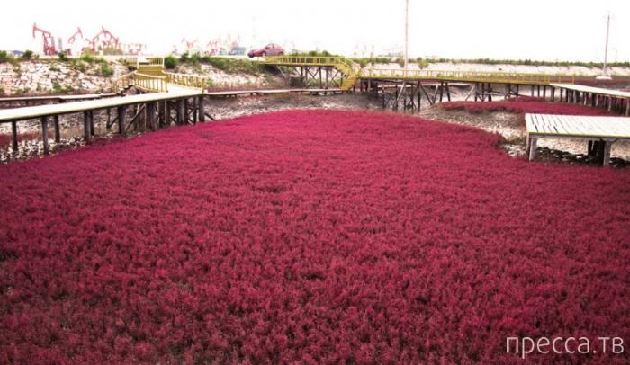 Красный пляж в Китае: осенние оттенки природы (6 фото)