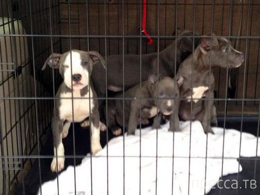 Так выглядят собаки, впервые севшие в машины своих новых владельцев (12 фото)