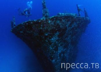 Красочный подводный мир от фотографа и путешественника Вячеслава Плотникова (20 фото)