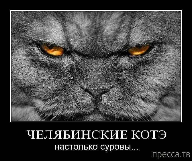 приготовленная злые коты демотиватор степанов