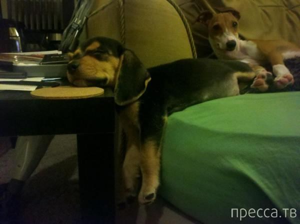 Проблемы животных с мебелью (30 фото)