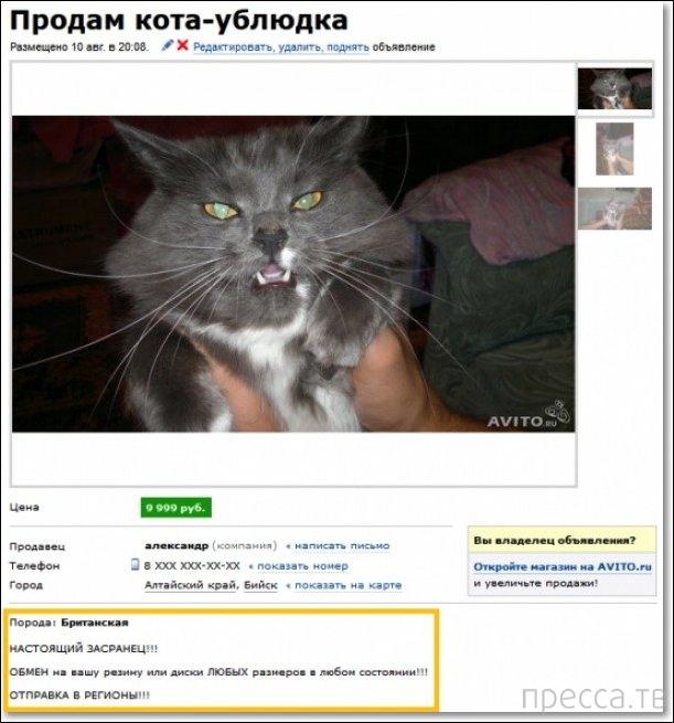 Прикольные объявления из интернета (17 фото)
