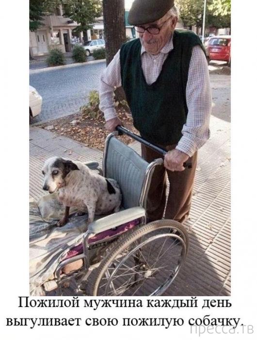 Примеры добрых и бескорыстных дел (20 фото)