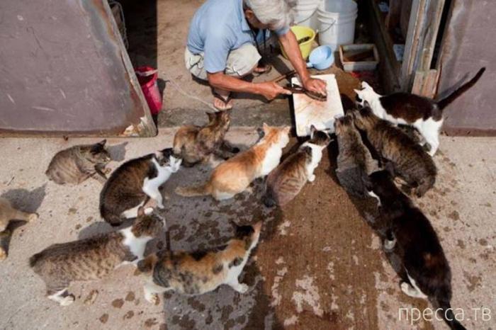 Тасиродзима - остров полудиких кошек в Японии (17 фото)