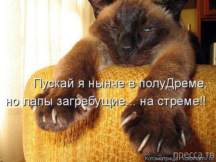 Лучшие котоматрицы недели (37 фото)