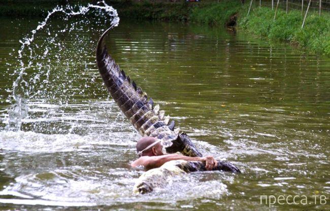 Необычная дружба человека с крокодилом (14 фото)