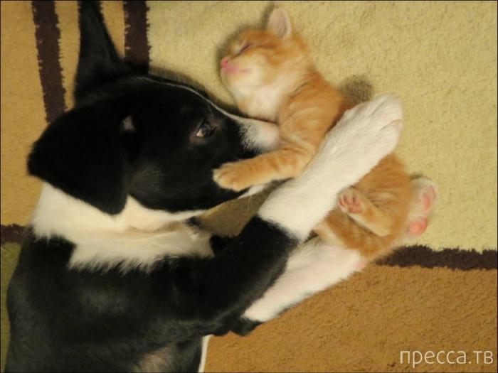 Забавные животные: кошки и собаки - лучшие друзья (31 фото)
