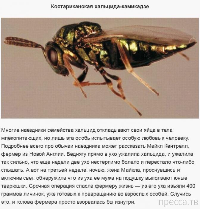Топ 19: Представители живой природы, опасные для человека (19 фото)