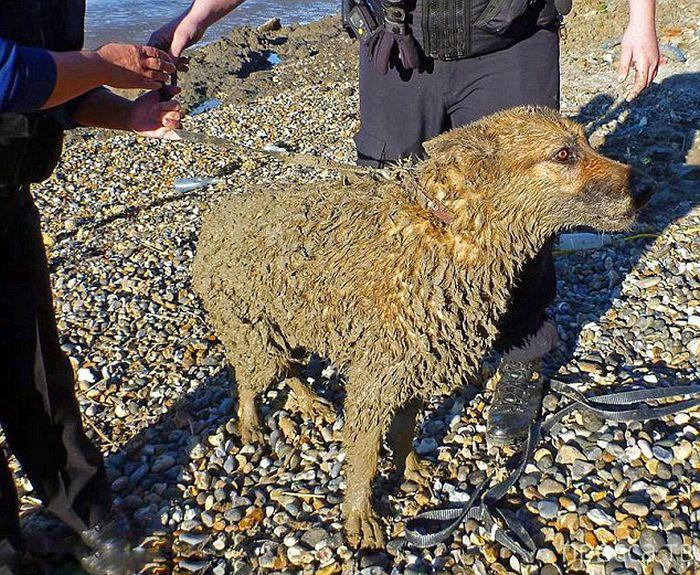 Хотели спасти собаку и сами попали в ловушку (7 фото)