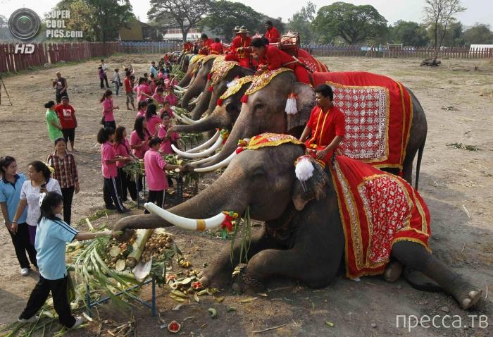 Национальный день слона в Таиланде (7 фото)