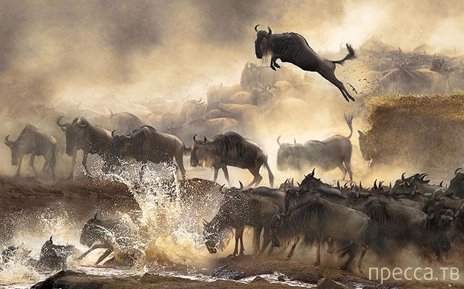 Победители Sony World Photography Awards 2014 (24 фото)