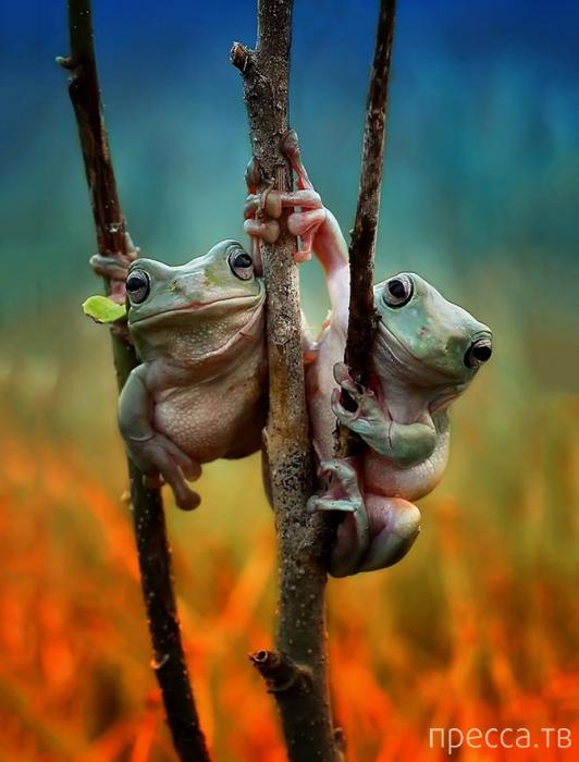 Жизнь самых интересных животных из разных уголков мира (18 фото)