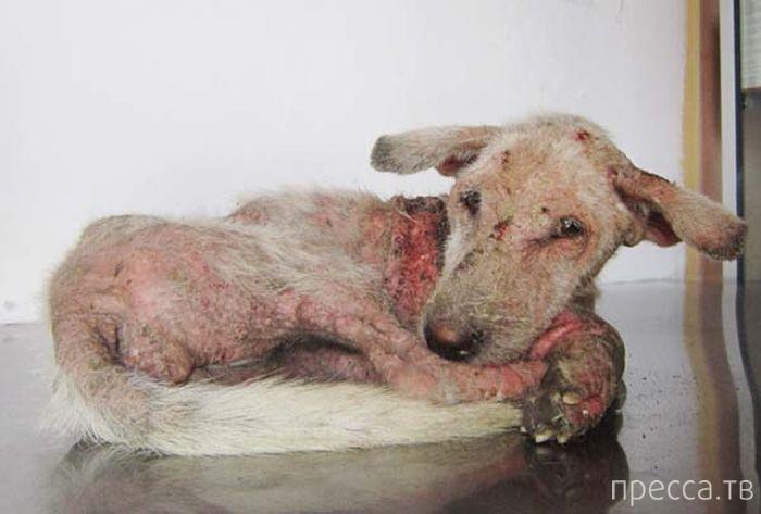 Спасение бездомной собаки от гибели (14 фото)
