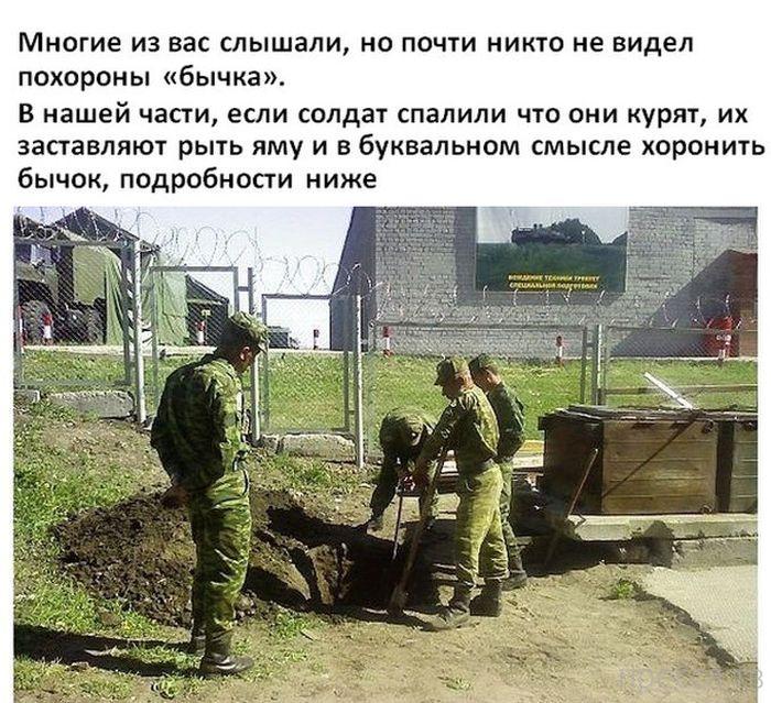 """Солдаты хоронят """"бычка"""" (8 фото)"""