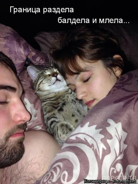Лучшие котоматрицы недели, часть 2 (50 фото)