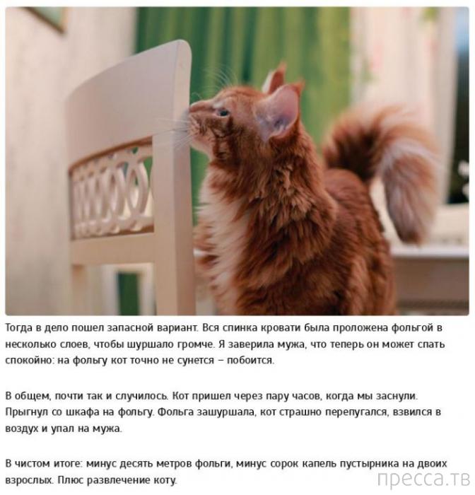 Позитивная история о дрессуре котов (10 фото)