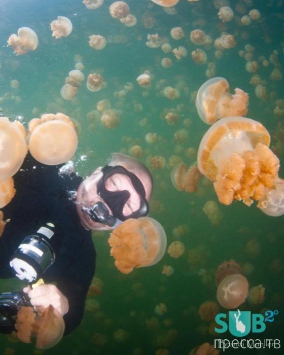 Озеро Медуз в архипелаге Палау (6 фото)