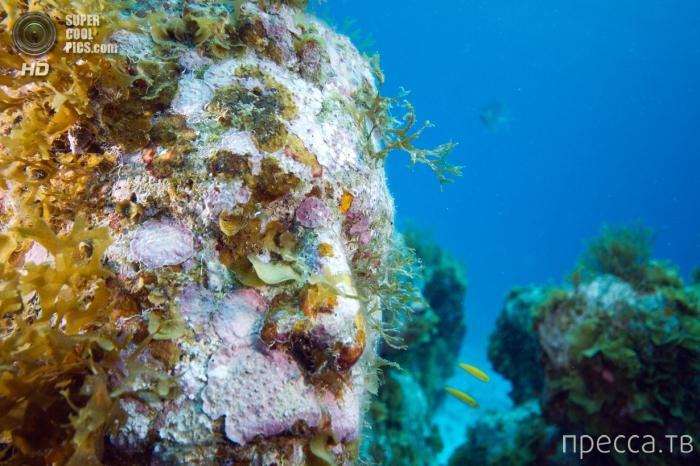 Подводный город - The Silent Evolution- в Мексике (25 фото)