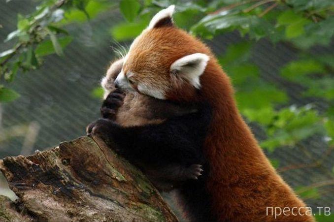 Милые и трогательные животные (22 фото)
