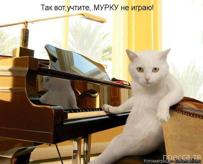 Лучшие котоматрицы недели, часть 3 (50 фото)