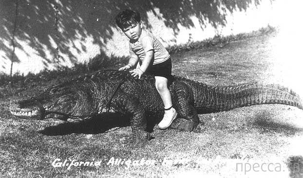 1920 год: Ферма аллигаторов в Лос-Анджелесе (9 фото)