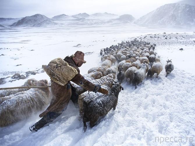 Лучшие фотографии National Geographic марта 2014 (31 фото)