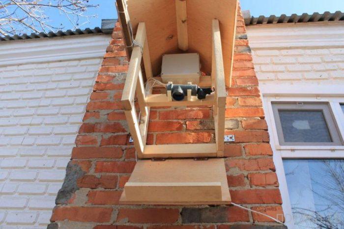 Креативная автоматическая кормушка для птиц (15 фото)