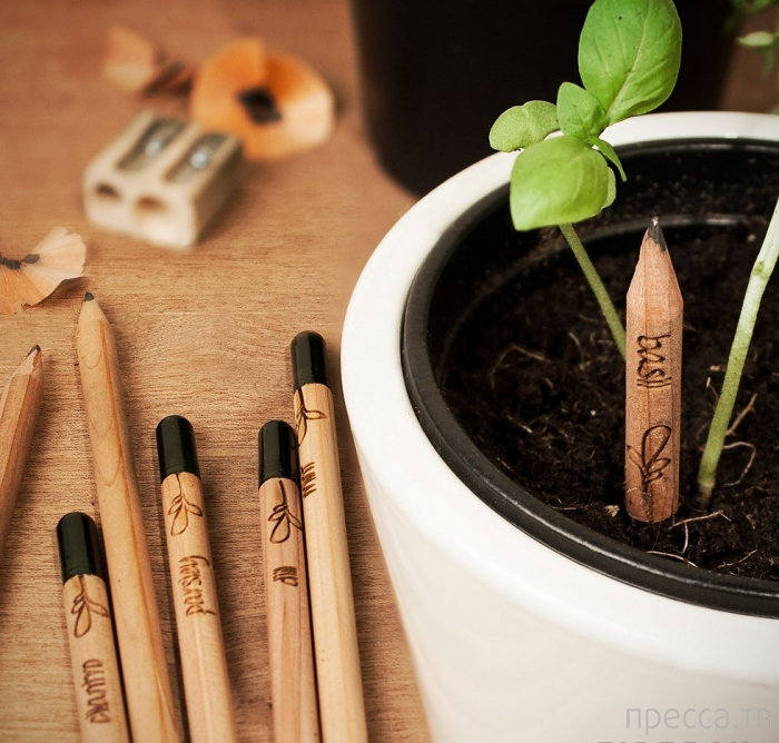 Эко карандаш, который растет (15 фото)