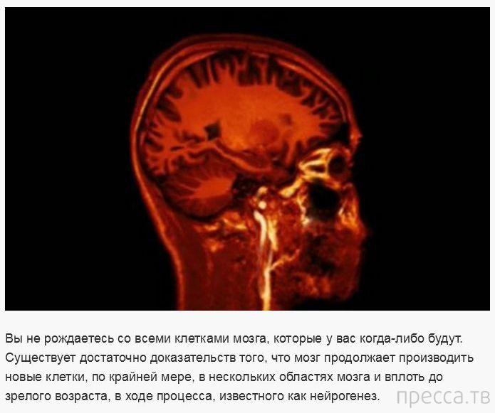 Ошибочные научные факты и утверждения (30 фото)