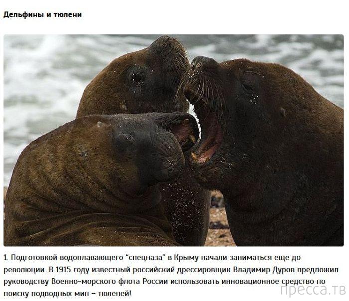 Животные, взятые на вооружение в разных странах мира (9 фото)