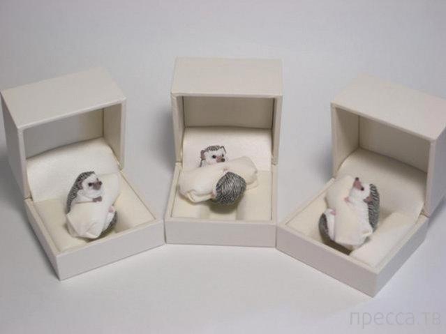 Кольца в виде животных от японского художника  Дзиро Миура (12 фото)