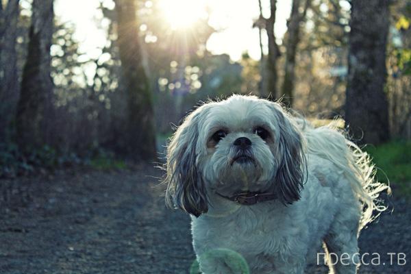Фотографии с милыми и красивыми щенками и собаками разных пород (48 фото)