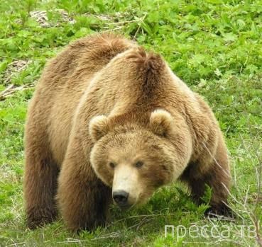 Реальная инструкция по поведению в местах, где водятся медведи...