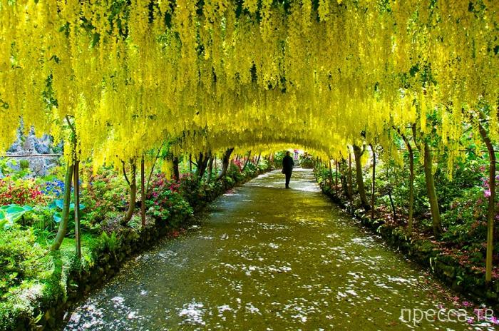 Невероятные и очень красивые тоннели из деревьев (20 фото)
