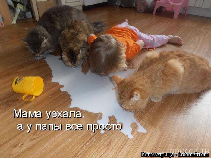 Лучшие котоматрицы недели, часть 4 (49 фото)